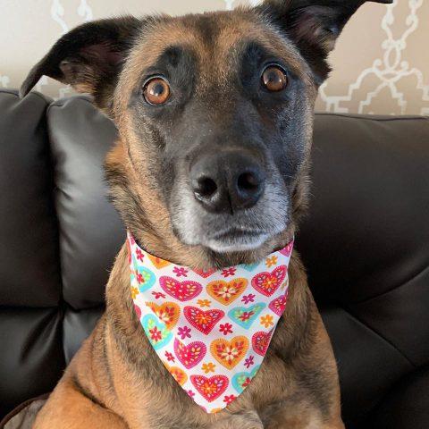 Doggie with a bandana